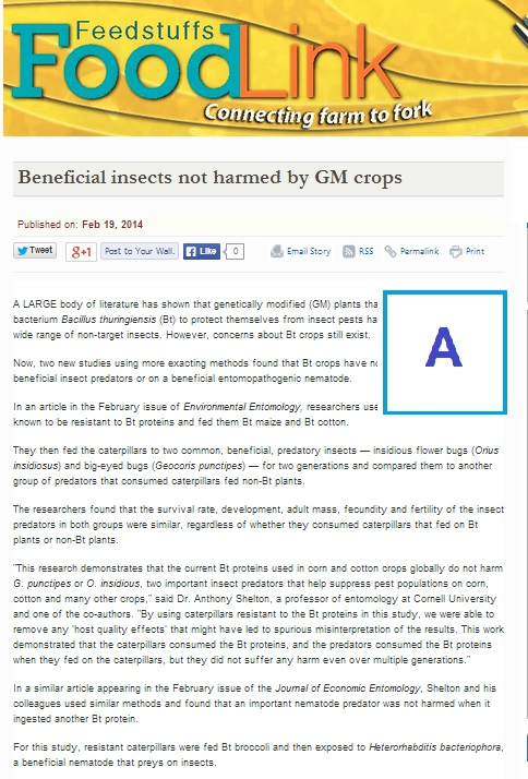 Beneficial insects not harmed by GM crops